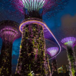 What to do in Singapore in 4 days: go see the super trees!