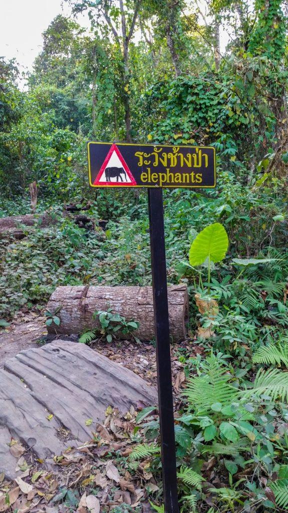 Elephants in one of Thailand's hidden gems