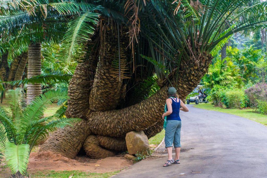 Sri Lanka in 3 weeks: the botanical gardens in Kandy