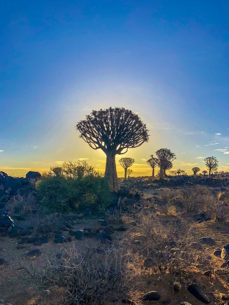 Quivertree Forest in Namibia