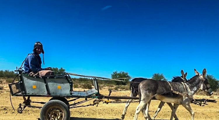 Donkey chariot